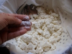 salting curds